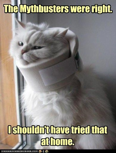 awww, poor kitty