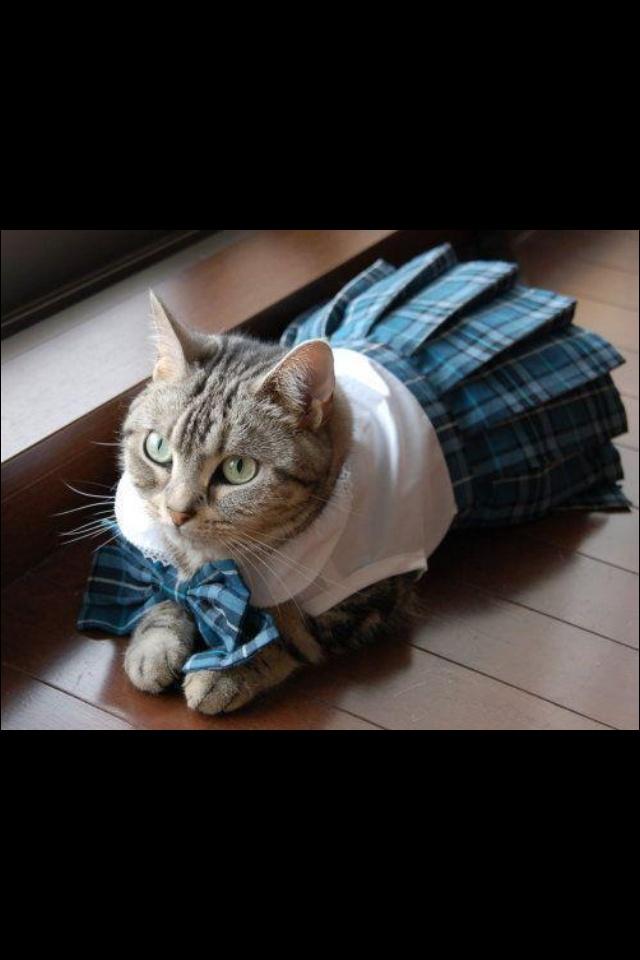 Zondagse jurk