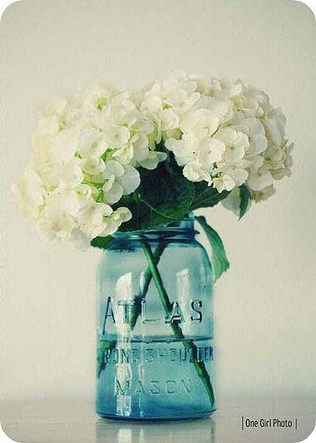 White Hydrangeas In Blue Mason Jar