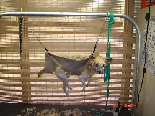 17 Best Images About Dog Grooming Hammock On Pinterest