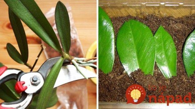 Tešte sa z nich donekonečna: Najjednoduchší spôsob, ako rozmnožiť obľúbené izbové rastliny!