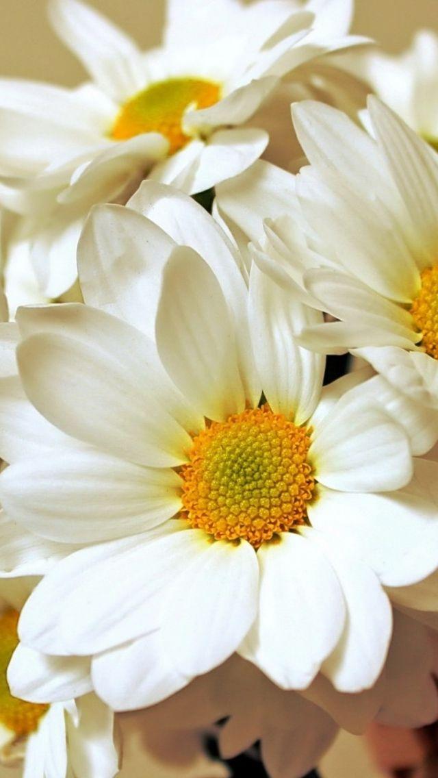 Wallpaper iPhone/flowers ⚪️