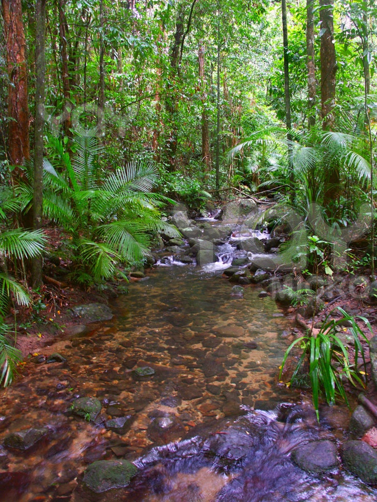 daintree rainforest www.greengetawaysaustralia.com.au
