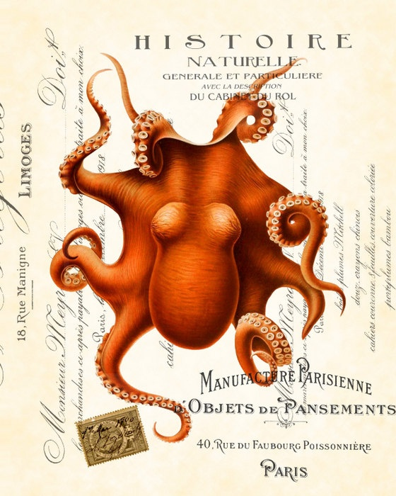 Vintage Red Octopus Collage Art Print 8 x 10 Natural History Illustration Collage Digital. $10.00, via Etsy.
