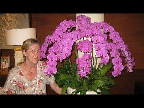 Как добавить цветонос у орхидеи? Искусственные цветоносы с АлиЭкспресс. - YouTube