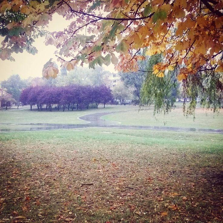 #park #city #goodmorning #autumn #autumnleaves #leaves #jesień #rain #trees #fall #winteriscoming #lodz #rainyday #cold #wet #dark