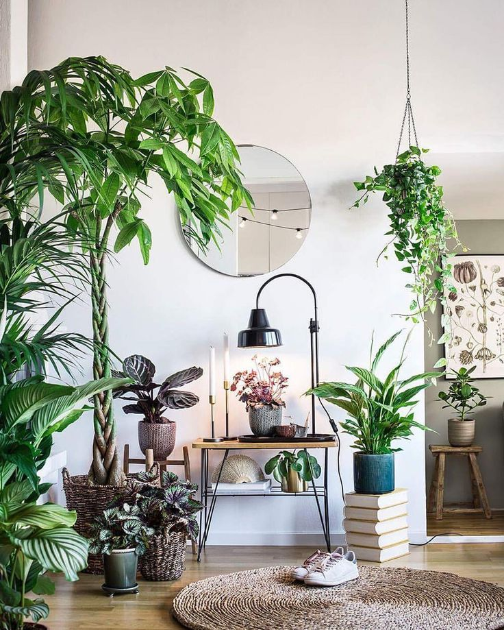 445 Best Indoor Plants Amp Arrangements Images On Pinterest