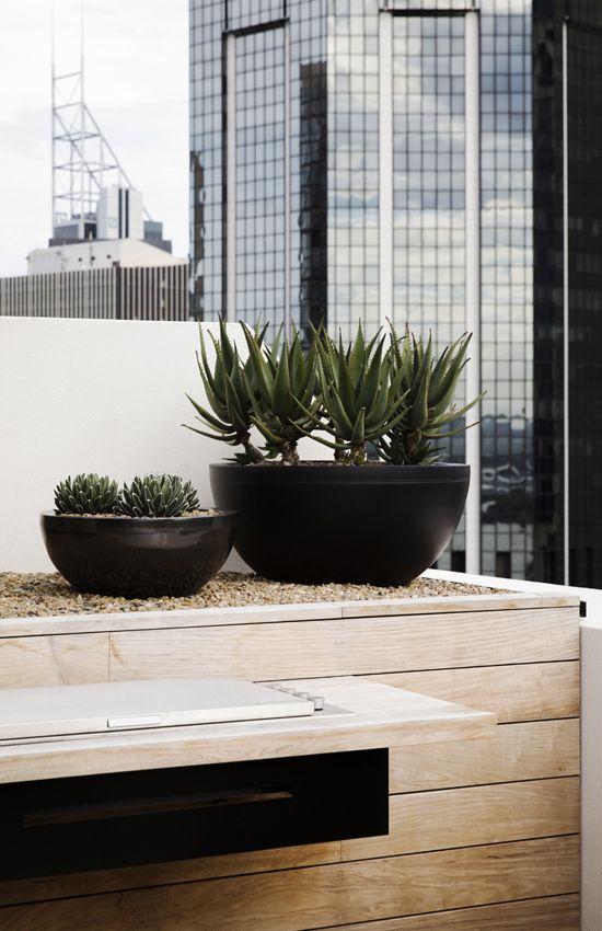 Robert Plumb custom Neil bowls and succulents