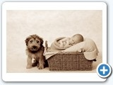 Newborn baby, baby and puppy, basket,newborn photographer perth adele miles