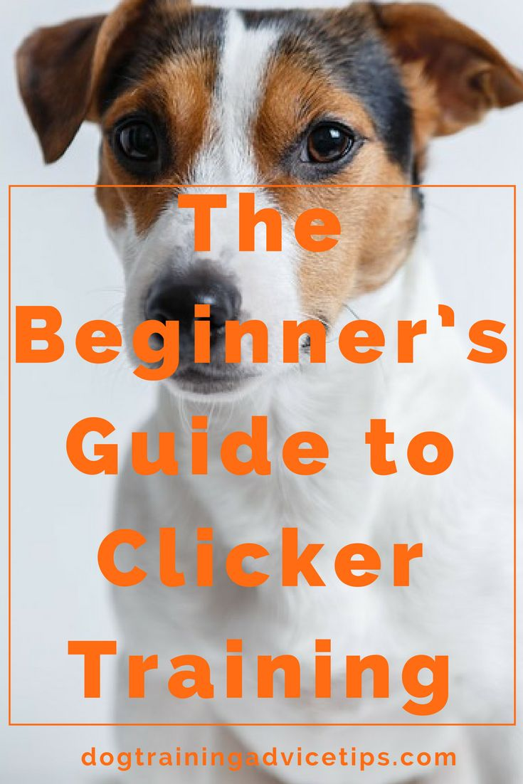 The Beginner's Guide to Clicker Training | Dog Training Tips | Dog Obedience Training | Dog Training Clicker | http://www.dogtrainingadvicetips.com/beginners-guide-clicker-training