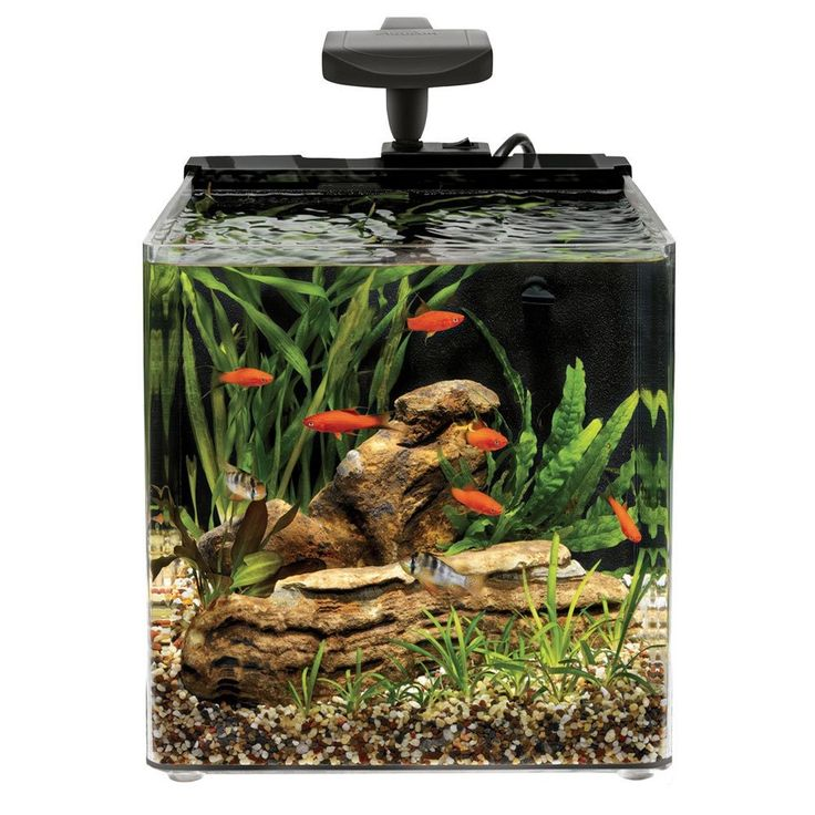 139 best betta fish tanks images on pinterest aquariums for Betta fish tanks for sale