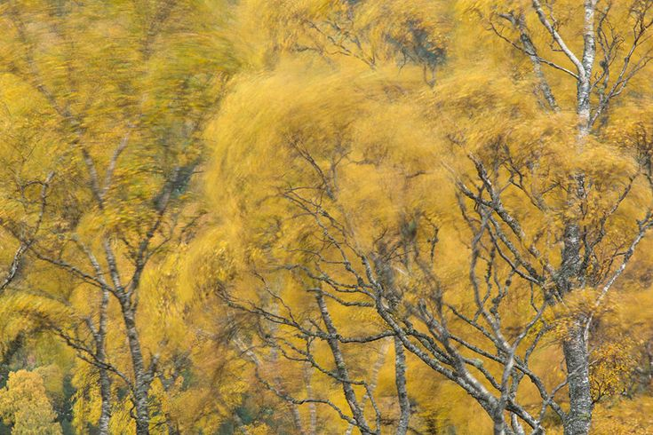 How to Take Creative Photos of Autumn Trees | Nature TTL