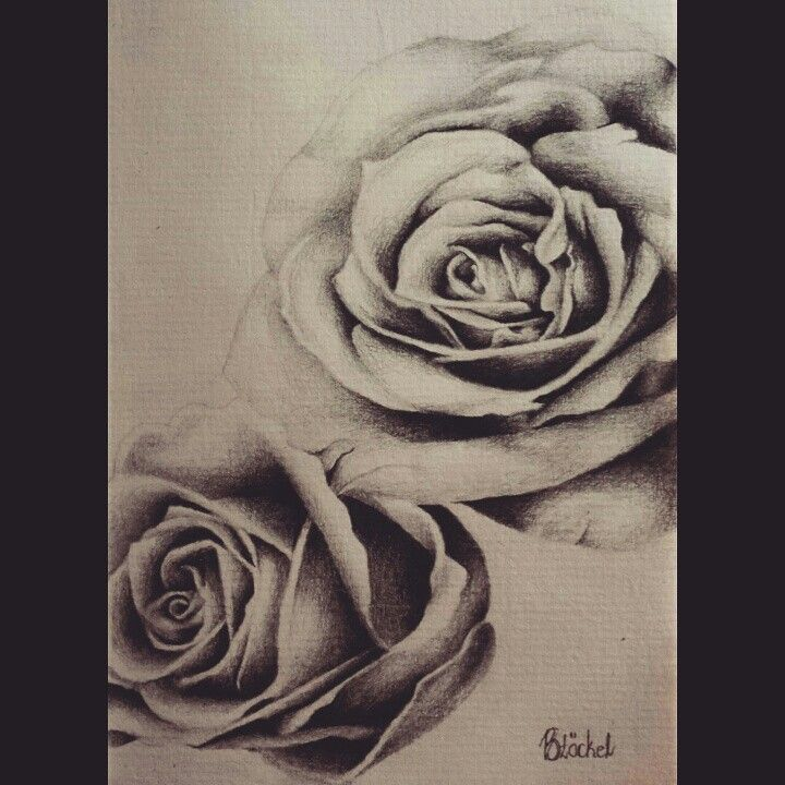 """""""Do it with passion or not at all"""" ♡ Pencil Sketch #artist #roses"""