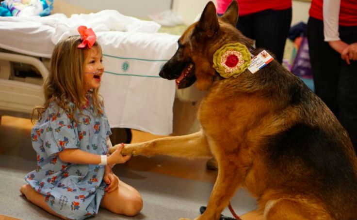 The job of a Therapy Dog is to provide affection and comfort to hoomans. Therapy Dogs must have a very specific personality in order to work in places like hospitals, schools, and nursing homes. They must be patient, gentle, calm, and above all, affectionate. While any breed can be trained for Therapy Work, the following …