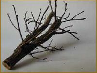 Trucs et astuces - Améliorations - Confectionner un arbre miniature au 1/35ème. - DIORAMA MAQUETTE MILITAIRE MAQUETTES CHARS MAQUETTES AVIONS FIGURINES DIORAMAS DECORS PEINTURE