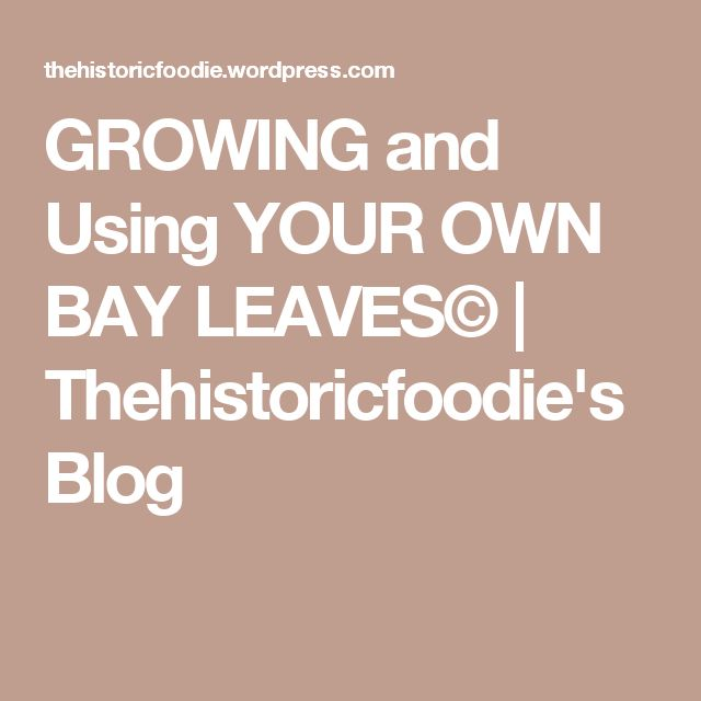 GROWING and Using YOUR OWN BAY LEAVES© | Thehistoricfoodie's Blog