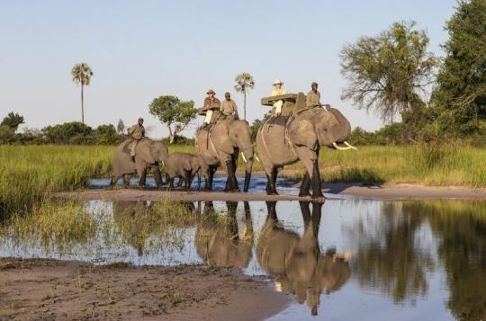 A lifetime experience at Abu Camp (Okavango Delta, Botswana). Wanna visit that fantastic place? Just let us know: info@gondwanatoursandsafaris.com