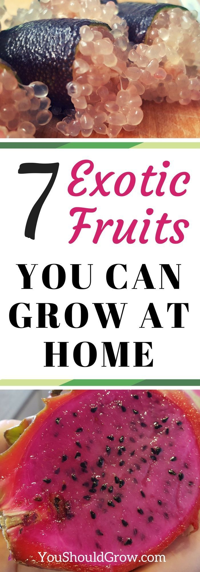 Do you love exotic fruits? These seven fruits can be grown at home. Click to find out how you can grow these exotic plants at home! via @whippoorwillgar