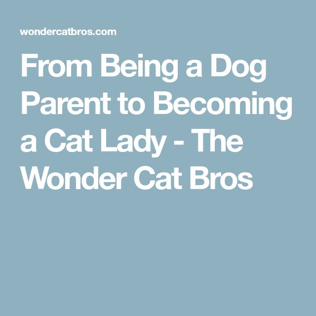 From Being a Dog Parent to Becoming a Cat Lady - The Wonder Cat Bros