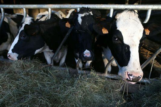 WorLd newS: Un cas de « vache folle » confirmé en France