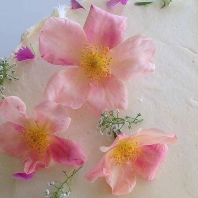 Silken #blush #pink old garden roses picked from my garden for today's cake. No wonder our little bees love them so much, they taste so sweet to eat!   #organic #homegrown #homemade #artisan #weddingcake #edibleflowers #mygarden #rose #nature