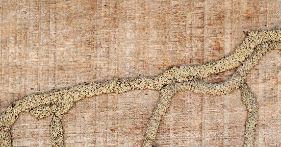 15 Little Signs Your House Has A Big Problem Signs Of Termites