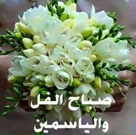 صور صباح الياسمين صباح الفل والياسمين Good Morning Roses Beautiful Flowers Wallpapers Good Morning Arabic
