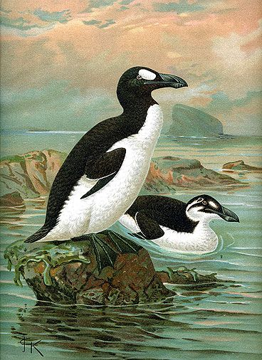 ✟ The Great Auk, Extinct by John Gerrard Keulemans