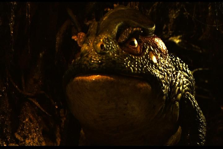 Giant toad from Pan's Labyrinth.