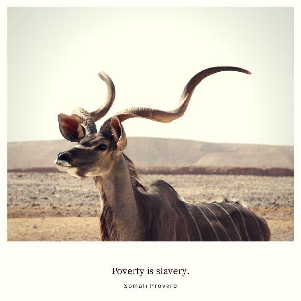 Poverty is slavery. ~ Somali Proverb ... kudu photo