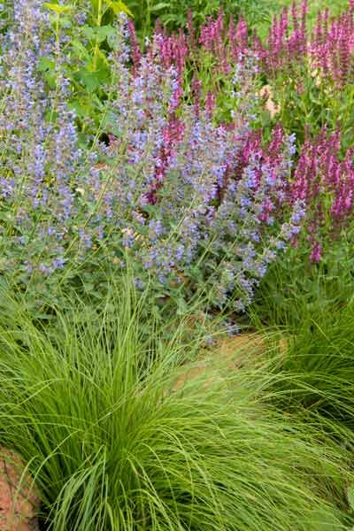 30 best style 6 cool palette images on pinterest for Ornamental grass edging