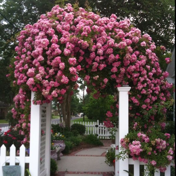 Garden Walk Buffalo Through The Garden Gates 6: 81 Best Plant Selection Images On Pinterest