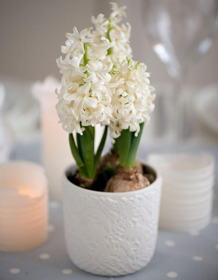 17 fakta alla som älskar hyacint borde känna till - Sköna hem