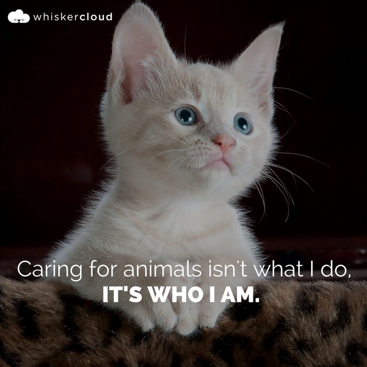 Pinterest Animal Quotes: Best 25+ Veterinarian Quotes Ideas That You Will Like On
