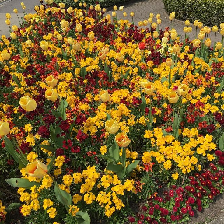 Stunning #flowers in #Harrogate town centre.