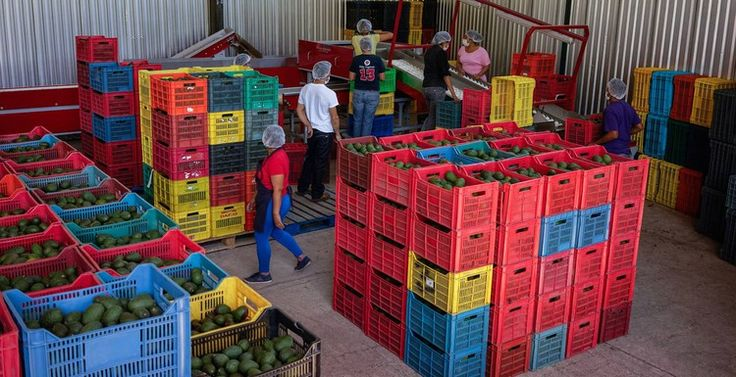 Holy Guacamole! Avocado Prices Rise to Record Highs