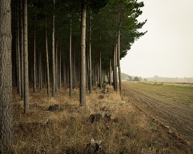 Clearing by Wayne Grivell, via Flickr