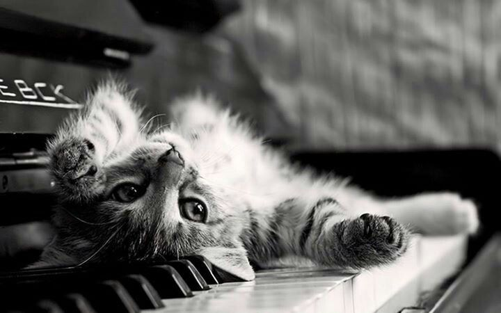 On my piano...