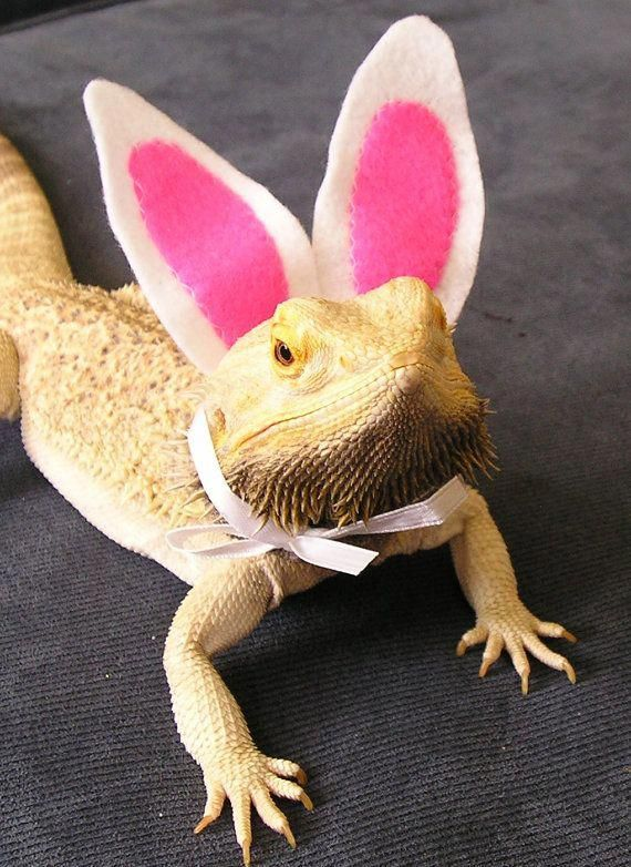 0cdb7847136 Handmade Felt Bearded Dragon Bunny Ears! with a FREE Fluffy Bunny Tail   beardeddragon