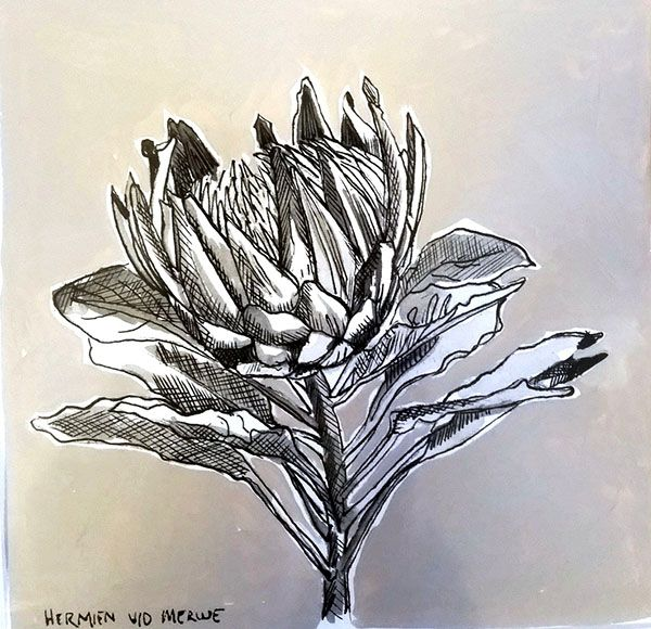 Title: Fynbos:  Table Mountain Fynbos 10 Medium: Pen-and-Ink drawing on paper with oil paint background Size: 200 x 200mm
