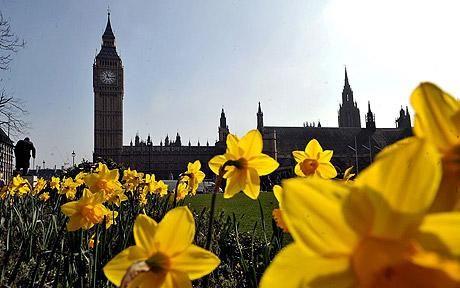 Big Ben/Daffodils