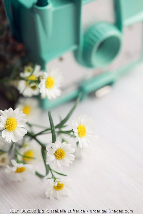 Daisies and vintage camera, Arcangel images, ©Isabelle Lafrance