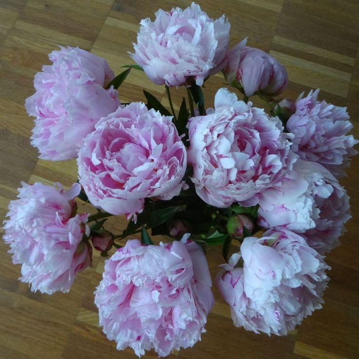:-) pink peonies - I <3 them :-)