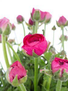 Blumen Online Bestellen Schnittblumen Katalog Blumigo Flowers