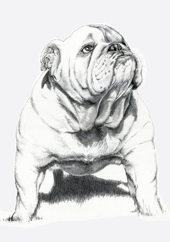 Dogs: Bull Dog Art Print by Ruben Pino