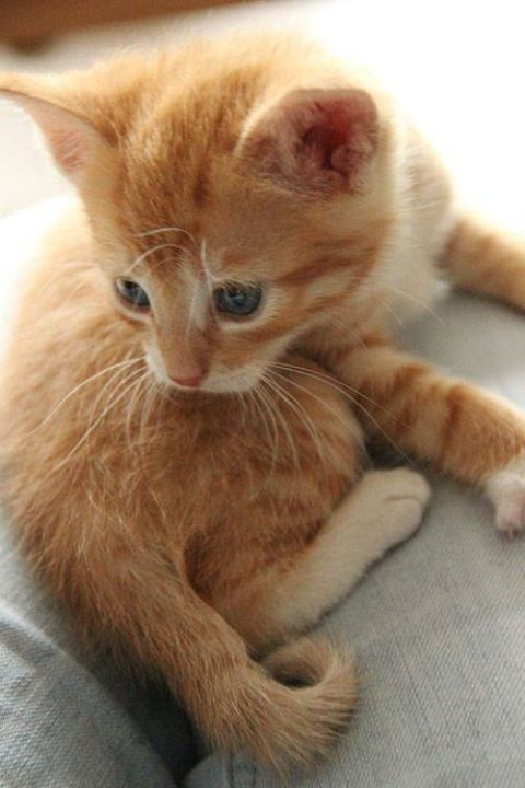 Cute Things For Cats Cats Kittens Orange Tabby Cats Cats