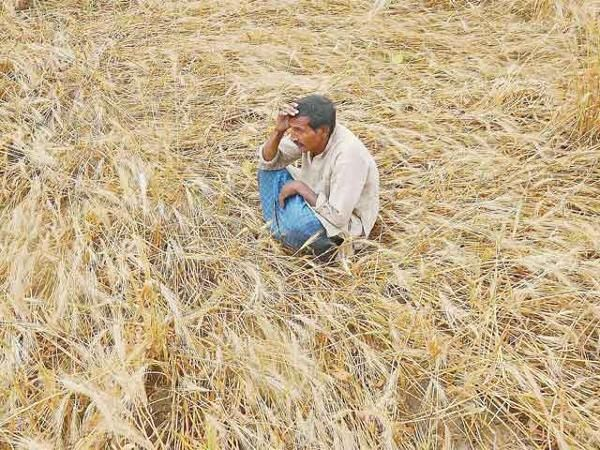 UP's Jalaun: State government's apathy turns Bundelkhand into a region of invisible farmer suicides - The Economic Times