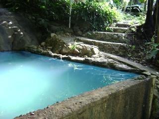 Nature Swimming Pool El Yunque Hamilton Forest Log