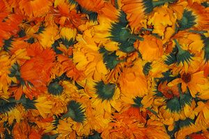 měsíček květy.jpg