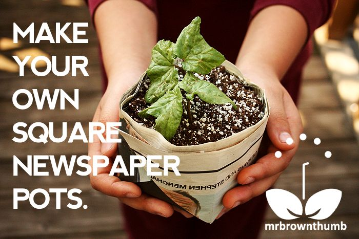 Make your own square newspaper seed starting pots - Simple but often overlooked method of starting seedlings